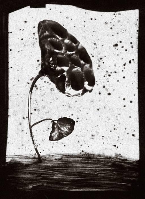 Un'opera della serie «Erbario» di Margherita Cesaretti