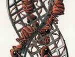 Il «Nastro di Moebius (Formiche rosse)» di Escher